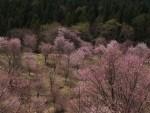 ゴールデンウィーク 福島県に行ってきました。